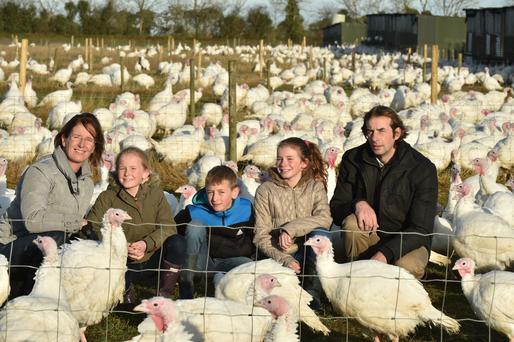 Having a busy time as all 5000 turkeys are allowed out to a cool -1.5 degree morning.