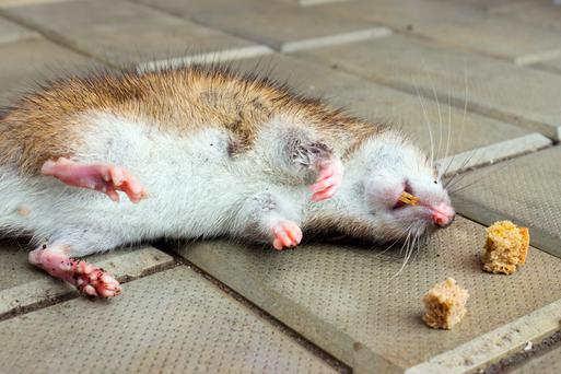 Scientists have launched a project to find out if genetically editing animals could provide a more humane method of pest control.