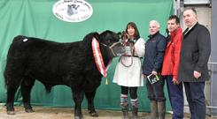 Champion Bull of the Show, Drumcrow Night Rider, exhibited by Frank McKiernan of Lacken Lower, Ballinagh, Co Cavan, which sold for the top price of €7,000 with Muirne McKiernan, Tony Flaherty, Red Mills, sponsors, John Farrell, President, and judge Gerard Hogan