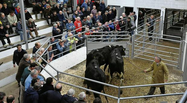 Cattle prices finally rise in unison across the divisions