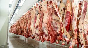 The development of the processing sector during the 1950s resulted in a sharp increase in the percentage of cattle slaughtered and exported as beef rather than shipped live.