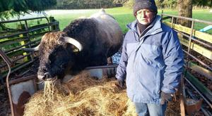 Mireille McCall with the oldest Aubrac bull in the country, 14-year-old Nolorgues Unicorn, one of the stock bulls on the farm at Kilcullen