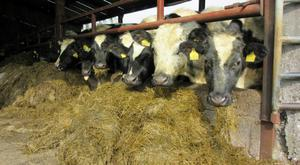 Silage stock is reducing. File photo