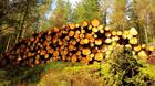 Harvesting can eat up a substantial chunk of the intial returns from forestry