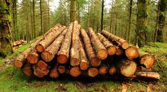 The company admitted taking trees out of some farmers lands but not paying them.