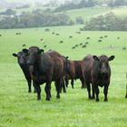The Government-commissioned report found that five key sectors of Irish industry will bear the brunt of Brexit, with beef, diary and processed food companies being the most negatively impacted. Stock photo