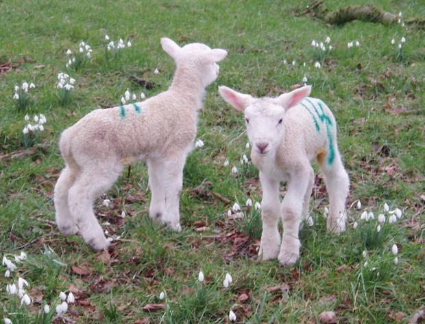 Lambing season - don't leave yourself isolated or fatigued