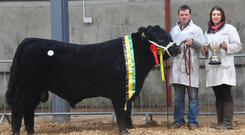 Irish Aberdeen Angus Champion of show and sale price topper at €4,700, Corlissmore Proud Boss, exhibited by Sean McKiernan, Corlismore House, Corlismore, Co Cavan, with Gerry McKiernan and Evelyn McKiernan.