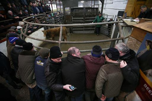 Mohill's 'Monaghan sales' attracts buyers from all over the country