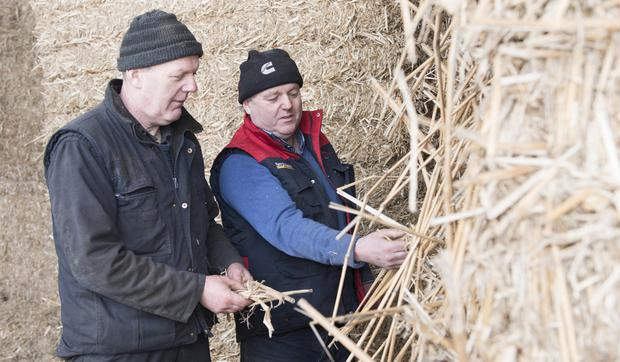 Brian and his brother Derek examine bales of miscanthus