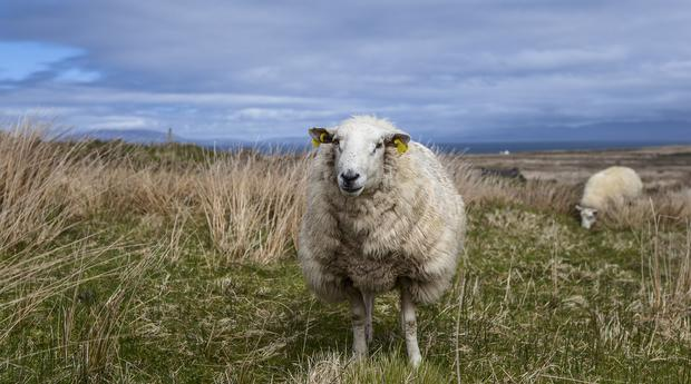 A long-awaited review of the legislation governing agricultural appeals has been published.