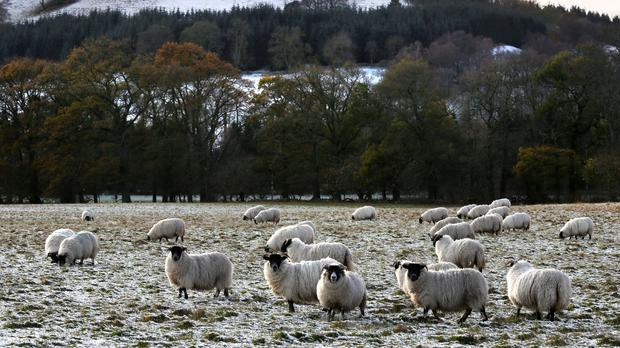 The study shows sheep farmers are particularly at risk (David Cheskin/PA)
