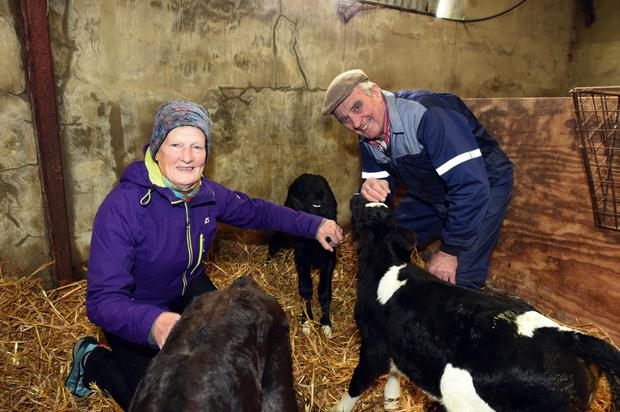 John and Noreen O'Neill on their farm in Cahirciveen: the O'Neills lost 16 cows to TB two years ago and 33 last year. Photo: Don MacMonagle
