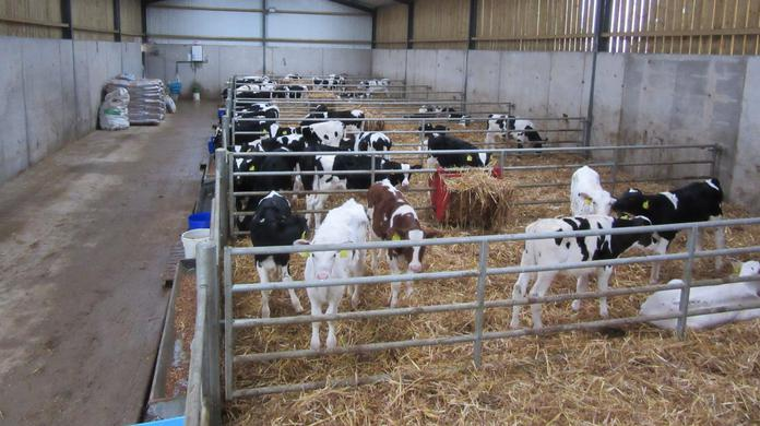 Indoor calving a driver of low vitamin D levels in Irish