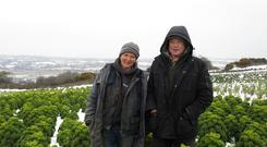 Jenny and Pat McNally pictured at their organic Dublin farm during the recent cold snap - their crop of kohlrabi was the only bad weather casualty.