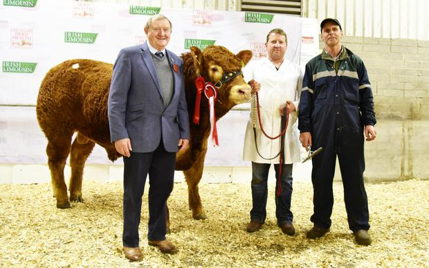 David Thomlinson, judge, Leo McEnroe, handler and Richard O'Beirne, Ardour, Cloghans Hill, Tuam, exhibitor with Millburn Luquacious Et the Junior Champion sold for €13,800.