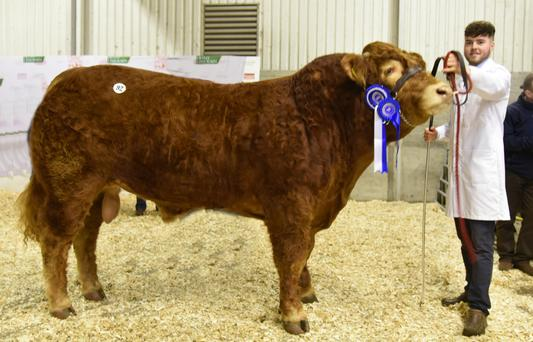 Kevin Treanor, Clontybunnia, Scotstown, Co Monaghan with the Reserve Junior Champion, Clontown Loni which sold for €5,000.