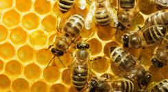 Three-quarters of the world's food crops rely on pollination.