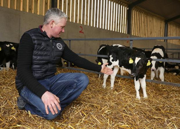 Pat Bowden with four-week-old Friesian calves in the purpose-built calf housing constructed last year