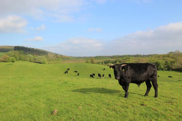 The Meath property comes in three lots