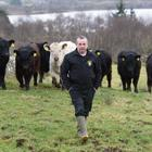 Sean Martin breeds light-footed Black Galloways on the Bluestack Mountains in Donegal. Photo: Clive Wasson