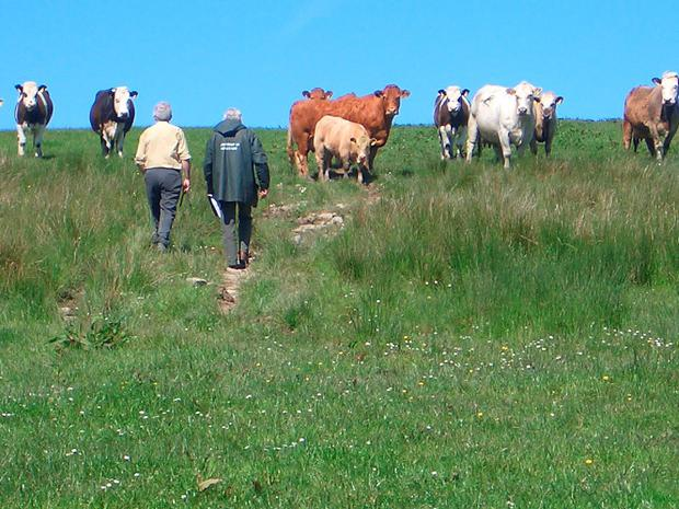 This case arose from a complaint by a member of the public that Wesley Withers was keeping livestock in breach of a previous life time disqualification. Stock Image.