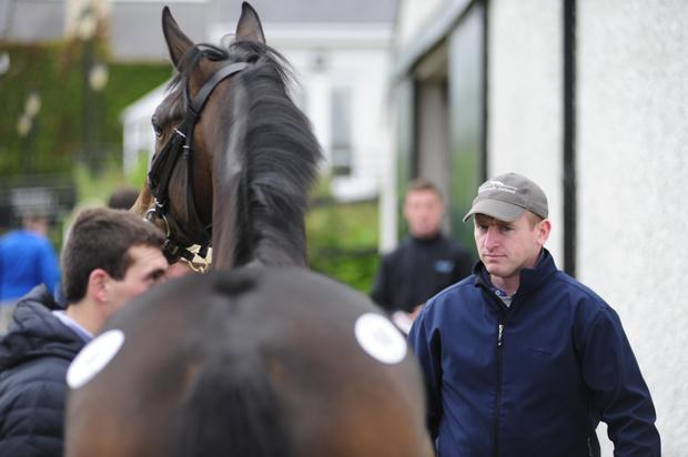 Trainer Donnchadh Doyle inspecting one of the lots on offer at the August National Hunt Sale at Tattersalls. Photo: Healy Racing