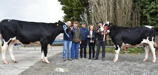 Michael and John O'Callaghan, Farnivane, Bandon, holding their double winners, Mountfarna Jetstream, reserve champion, and Mountfarna Jetway, Overall Champion of Show at the IHFA Premier Show and Sale at Nenagh, with Pat Frawley, judge, Charles Gallagher, CEO, IHFA and Kathleen Watson, IHFA President.