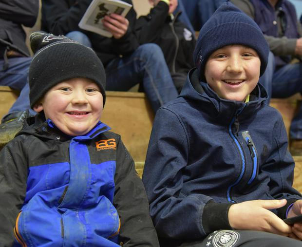 Matthew Healy (5), and his brother Daniel watching at the IHFA Premier Bull Show and Sale at Nenagh Mart where their father, Michael Denis Healy, Mylane Ovens Co Cork was one of the exhibitors.