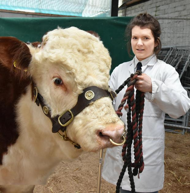 Catherine Smyth, Ardmulchan, Navan, leading Ardmulchan Napoleon, a third prizewnner, at the Hereford Cattle Society Premier Bull Show and Sale at Tullamore.