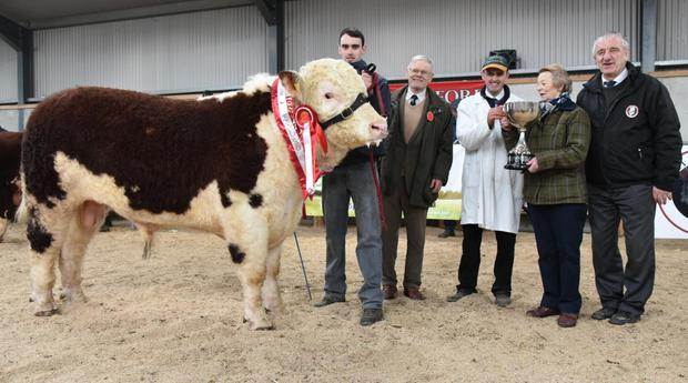 James J Farrell, Trillick-A-Temple, Longford, Co Longford receiving the trophy for Champion of Show at the Hereford Cattle Society Premier Bull Show and Sale at Tullamore for Airhill Oconaill from Mrs Rosemarie Blandford, with Ciaran Farrell, Gerald Blandford, judge, and Pat McCarthy, President, Irish Hereford Cattle Society.