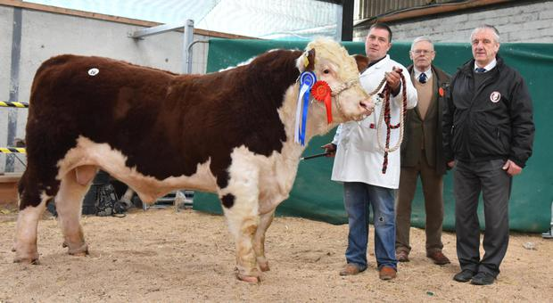 Nigel Heatrick, Annareagh, Glaslough, Co Monaghan with Glaslough Sid, reserve Champion of the Show, Gerald Blandford, judge, and Pat McCarthy, President, Irish Hereford Cattle Society.