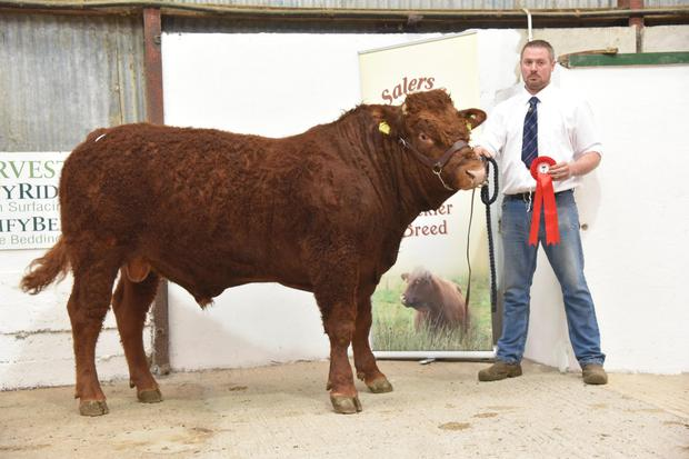 Ryan Griffith from Carricknahorna, Ballyshannon, Co Donegal, with first prizwinning bull, Cashelard Ryan.