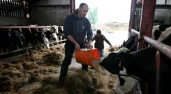 Joe Devine gets a helping hand from his daughter Isobel on their County Leitrim Farm