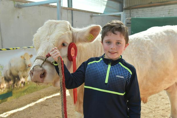 Enda Mullins (11) from Clohanmore, Cree, Kilrush with show first prizewinner Clohanmore Martin.