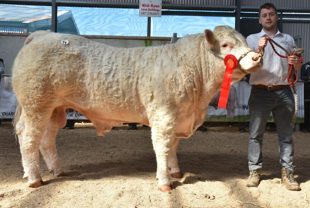 James Geoghegan from Lisnagree, Streamstown, Mullingar with prizewinning bull Lisnagree Noel, which sold for €5,500.