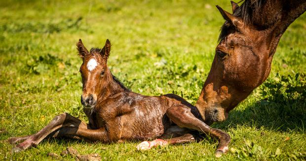 A new foal