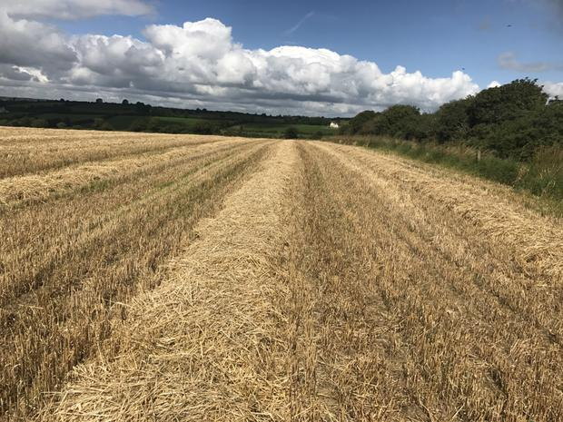 About 60ac of the ground at the Ballybane holding is in stubble with 155ac in grass