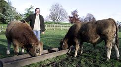 Kim McCall of Calverstown with two of his 10-month-old Aubrac bulls.