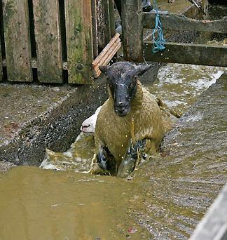 Farmer was in court over allegedly building a sheep dipping tank without planning permission. Stock image.