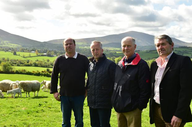 Blackstairs Mountains' farmers Thomas Mc Carthy, Larry Farrell, Peter Rose, Martin Shannon. Photo Roger Jones.