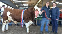 Champion of Show and price leader, Bingfield Jagger, with Arnold Hastings, Bingfield Hse, Crossdoney, Co. Cavan, exhibitor and Chris White, judge at the Irish Smmental Society bull show and Sale at Roscommon on Friday.