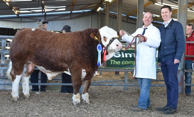 Martin Mooney, Clononymore, Shannonharbour, Birr, exhibitor and Chris White, judge, with Tisaran Jackson, reserve champion at the Irish Simmental SocietyBull Show and Sale at Roscommon.
