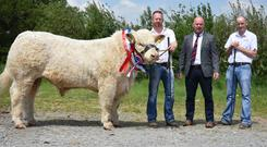 Barry and Rory Quinn, Newmarket On Fergus, Co Clare and Sean McGovern, judge, with Clenagh Noble 2, Junior Champion of the Show at the Charolais Cattle Society Show and Sale at Tullamore on Saturday sold for the top price of €6,200