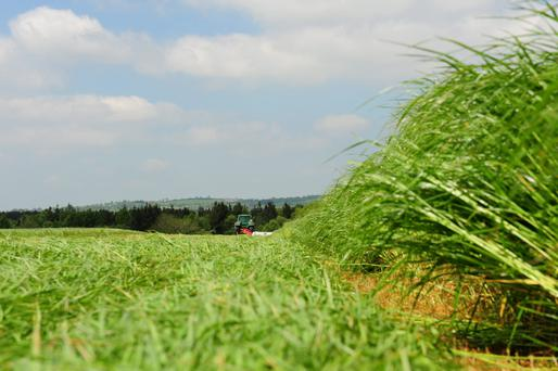 Delaying first cut silage too long past grass heading date will cause a large drop in quality and reduce second cut yields significantly