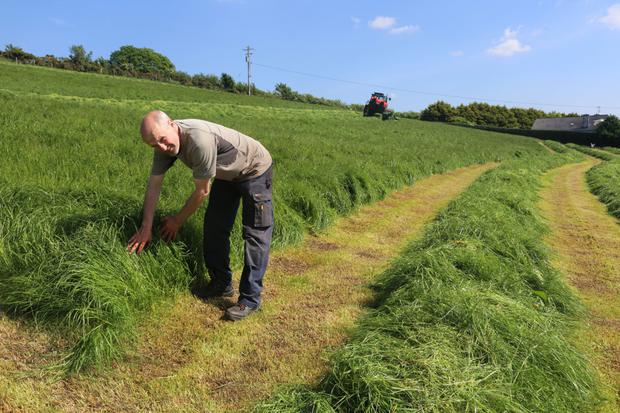 Michael testing the silage crop