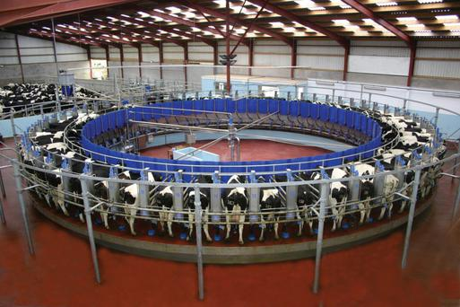 Expansion is no antidote to inefficiency: the gross margins on our dairy farms can range from €960 to €1485 per cow