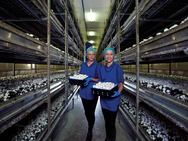 Workers at the Codd Mushrooms facility in Carlow with their company's new range of organic mushrooms