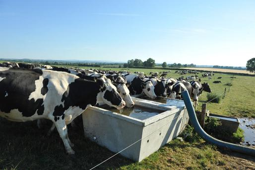 Gerry Nolan and his son James have been drawing two tankers of water a day from the River Nore to keep their cows hydrated during the heatwave. Photo: Roger Jones