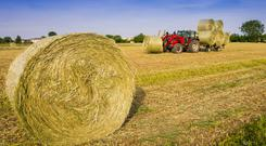 Tractor drawing bales in the sunshine. Stock image.
